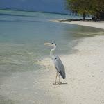 Maldivi (7).jpg