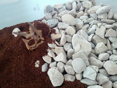 Dinosaur dig sensory bin for kids from And Next Comes L