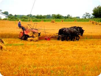23a-harvesting