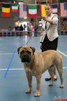 20130511-BMCN-Bullmastiff-Championship-Clubmatch-1665.jpg