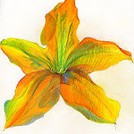openflower2.jpg