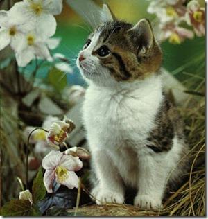 Rahsia Penciptaan Kucing Yang Menakjubkan