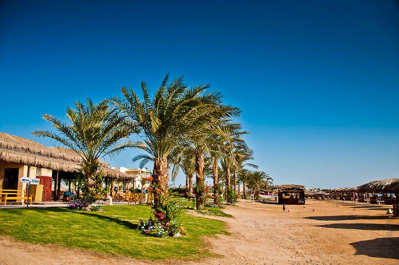 Отель Caribean World Resort Soma Bay. Хургада. Египет. Спуск к пляжу засажен пальмами и травкой, так как отель не новострой, то всё очень зелено.
