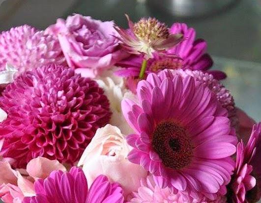 gerbera 1185808_10151817802081257_166810525_n solomon bloemen
