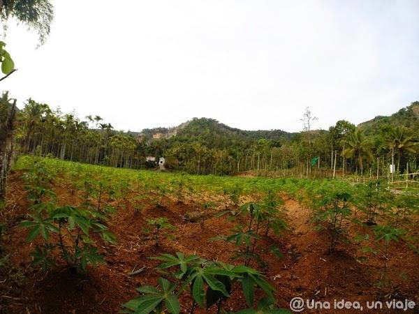 Kerala-Thekkady-Periyar-National-Park-unaideaunviaje.com-KeralaBlogExpress-3.jpg