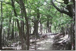 Bosque de Lengas - Circuito W