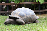 Super old tortoise