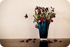 dead tulip petals