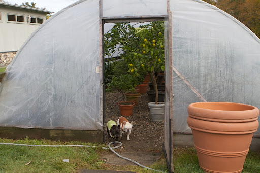 Well, Sharkey, it's nice and toasty in this hoop house, as well, so I guess that winter storage of the tropical plants is moving along nicely, as expected.