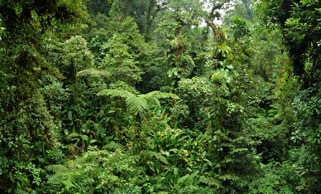 Imagini Costa Rica: Padurea Tropicala Monteverde