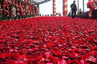 hotel-rose-petals
