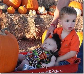 pumpkin 033