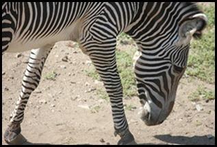 Zoo5 028