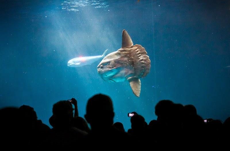 aquarium-22
