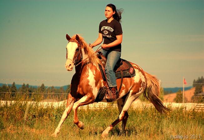 horses12