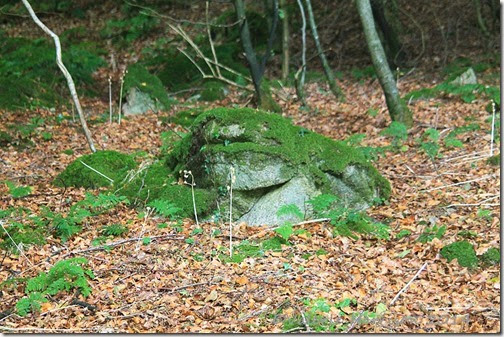3-big-toad-rock