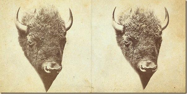 Le massacre des bisons en Amérique