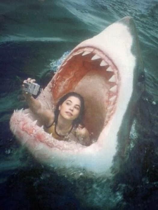 selfie-tubarão