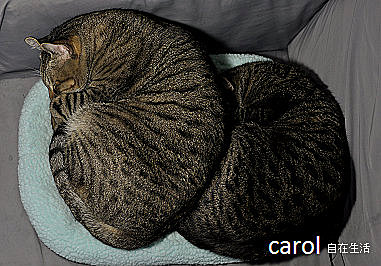 Carol 自在生活 : 法式千層薄餅蛋糕