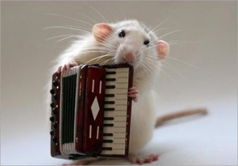 multi-talented mouse 04