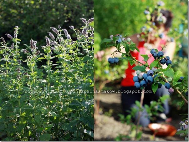 ogród i biszkopt z papierówkami