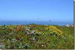 Bodega Head Flowers-1