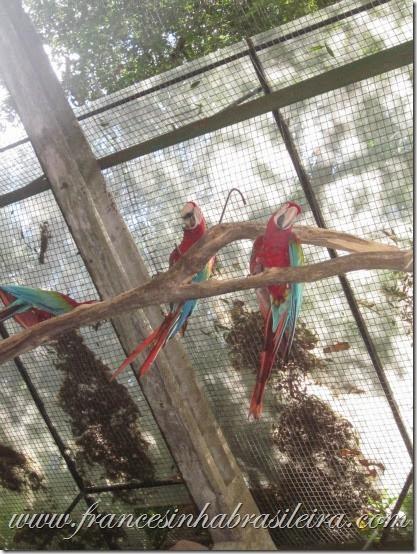 Foz do Iguaçu aves
