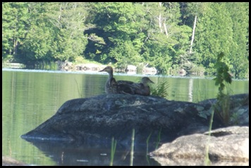 Kayaking Seal Cove Pond 129