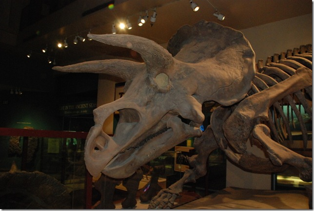 11-12-12 B Museum Of Natural History 012