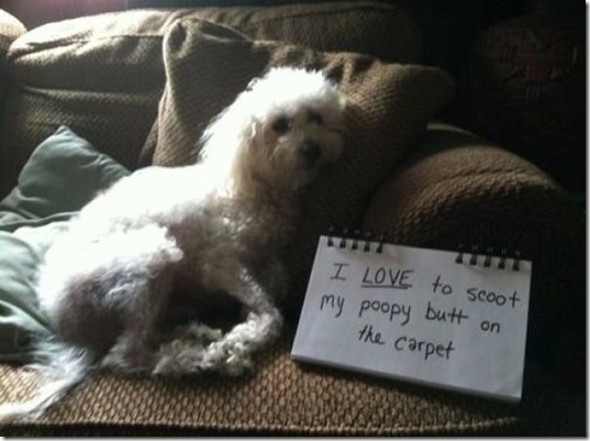 dog-shaming-bad-30