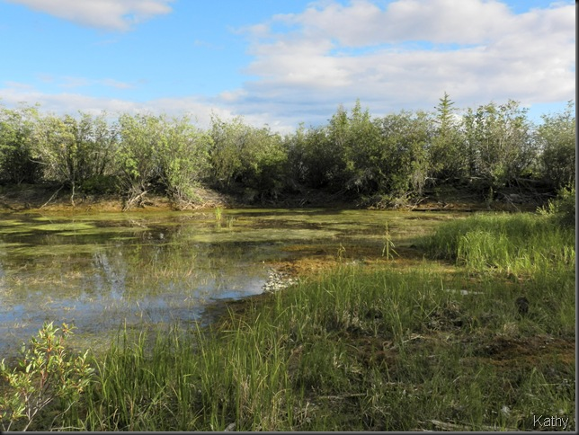 marshy area
