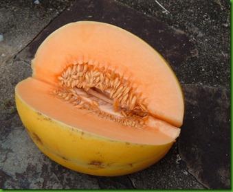 Mango Melon