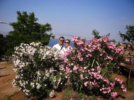 33. Printre florile din Buyukada.JPG