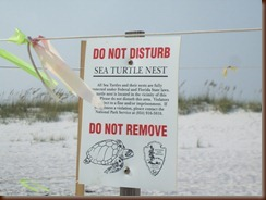 sea turtlle signs