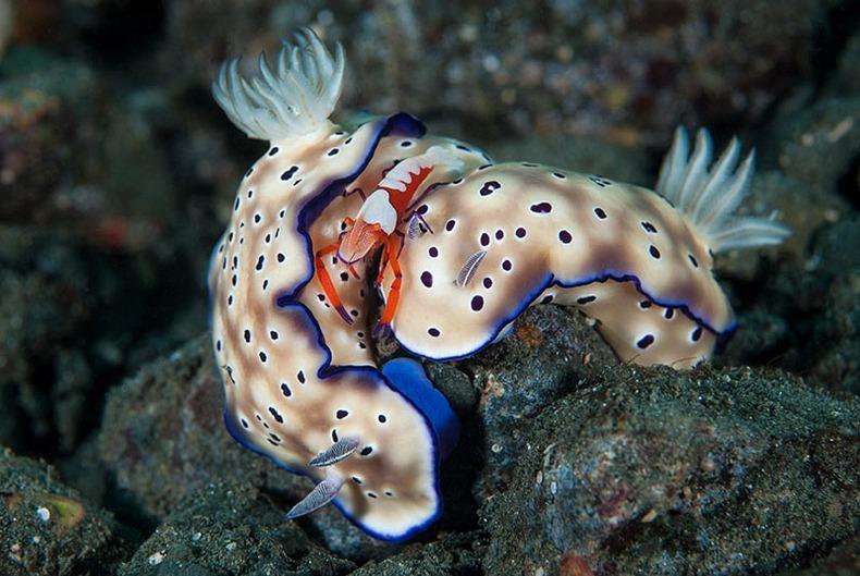 miami-underwater-photo-contest-14