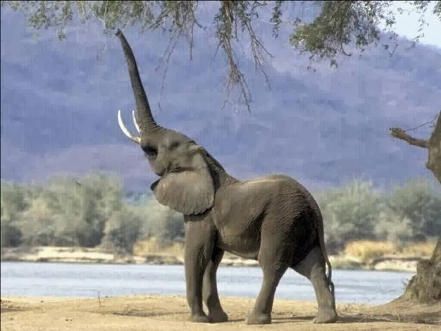 Short Essay On Elephant | Paragraph On Elephant | Elephant Essay ...