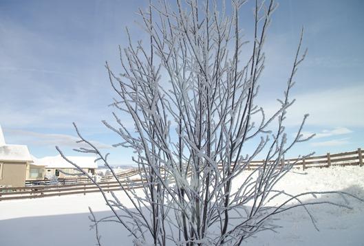 Dec Snow-2