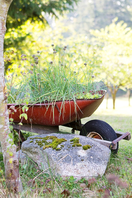 wheelbarrow flower pot, wheelbarrow with flowers