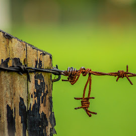by Dakota Flora - Novices Only Objects & Still Life ( farm, fence, green, barbed wire, rustic, country )