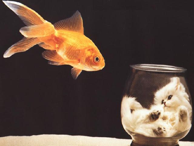 Aqui les traigo estas imagenes de peces espero que les guste