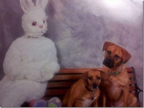 easter-awkward-bunny-1
