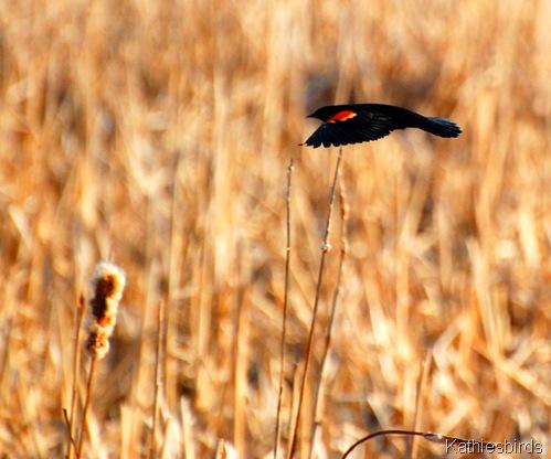 12. flying away-kab
