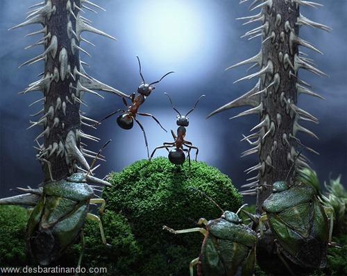 formigas inacreditaveis incriveis desbaratinando  (61)