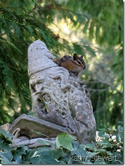 Townsend's Chipmunk