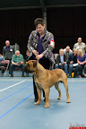 20130510-Bullmastiff-Worldcup-0268.jpg