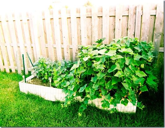 Garden July 17-4