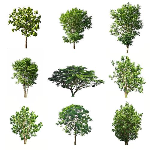stock lá cây