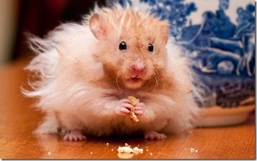 hamster grande imagen (19)