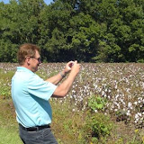 Gary taking picture of cotton growing.