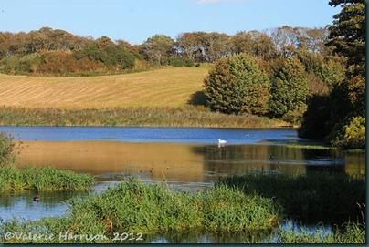 33-ardwell-pond
